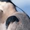 Bl Heron Tight-0703