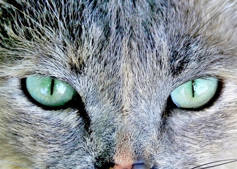 Exquisite Eyes.