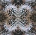 Cactusfractal