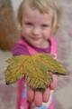 One lovely, crispy leaf