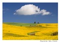 palouse golden fields