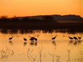 Sandhills at Sunset