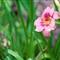 contax_flower_2