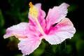 flower_lr_5_24_11-2