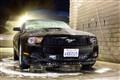 Wet Mustang