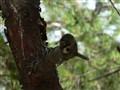 cut branch
