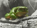 BW Frog