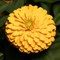 Yellow Flower 2-2