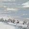 Sanderlings 02