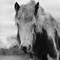 Gypsy Horse's