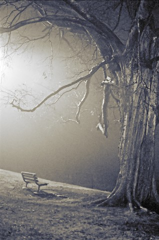 Bellerive Park, in Saint Louis, Missouri, USA - view of park bench and bare tree, at night with fog (black and white with toning)
