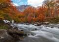 Autumn colors in patagonia