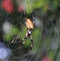Spider in Web - Myrtle Beach S.C.