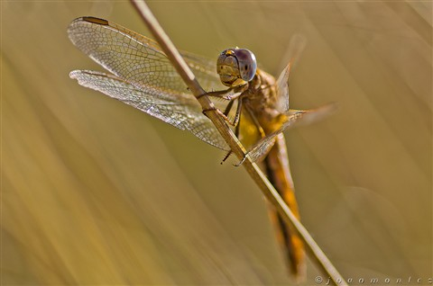 Dragonfly close encounter