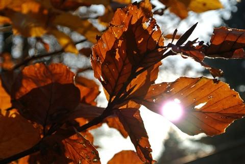 nikonv1_leaf