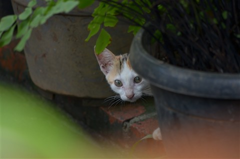 Kucing ngintip