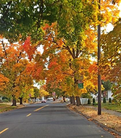 autumn_streets_3