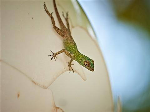 Lizard1080613
