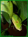Tree_Python