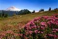 Garibaldi Flowers