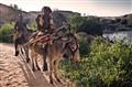 A10-Arco-Magubale-Cowboys