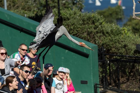 Taronga Bird Show