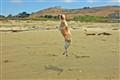 Bennie Ballet Dog