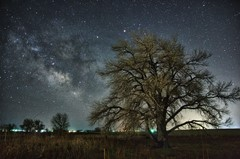 Tree and Milky Way