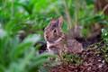 wet bunny