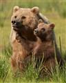 Mama bear and cub