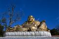 The Golden Buddah