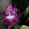 FlowerMacroDemo-35mmlens