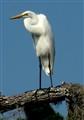 Heron       United States