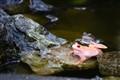 klPhoto-Albino-Frog