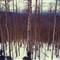 treeperspective