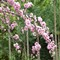 Blossom Falls