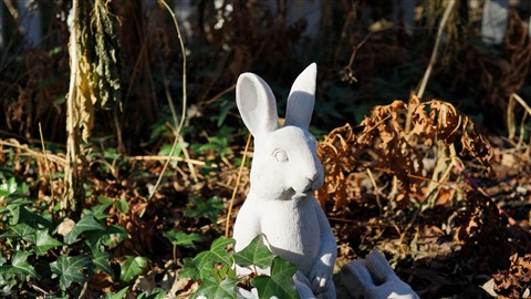 50mm Rabbitt (3000x1689)
