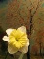 Flores interiores nocturnas