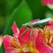 17-03-07 P1930139 Mantis full body