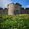 York Daffodils