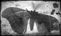moth thing on window