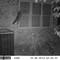 RaccoonBirdFeeder103013SUNP0124