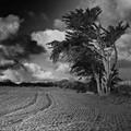 Brittany coast tree