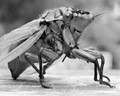 giant insects will rule the world