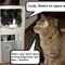 Alpha cats 2