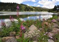 Flowers and Lake at 11mm