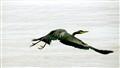 Fly Heron Fly