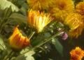 FLOWER L