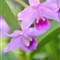 floral_37