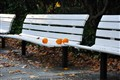A bench with fallen oranges